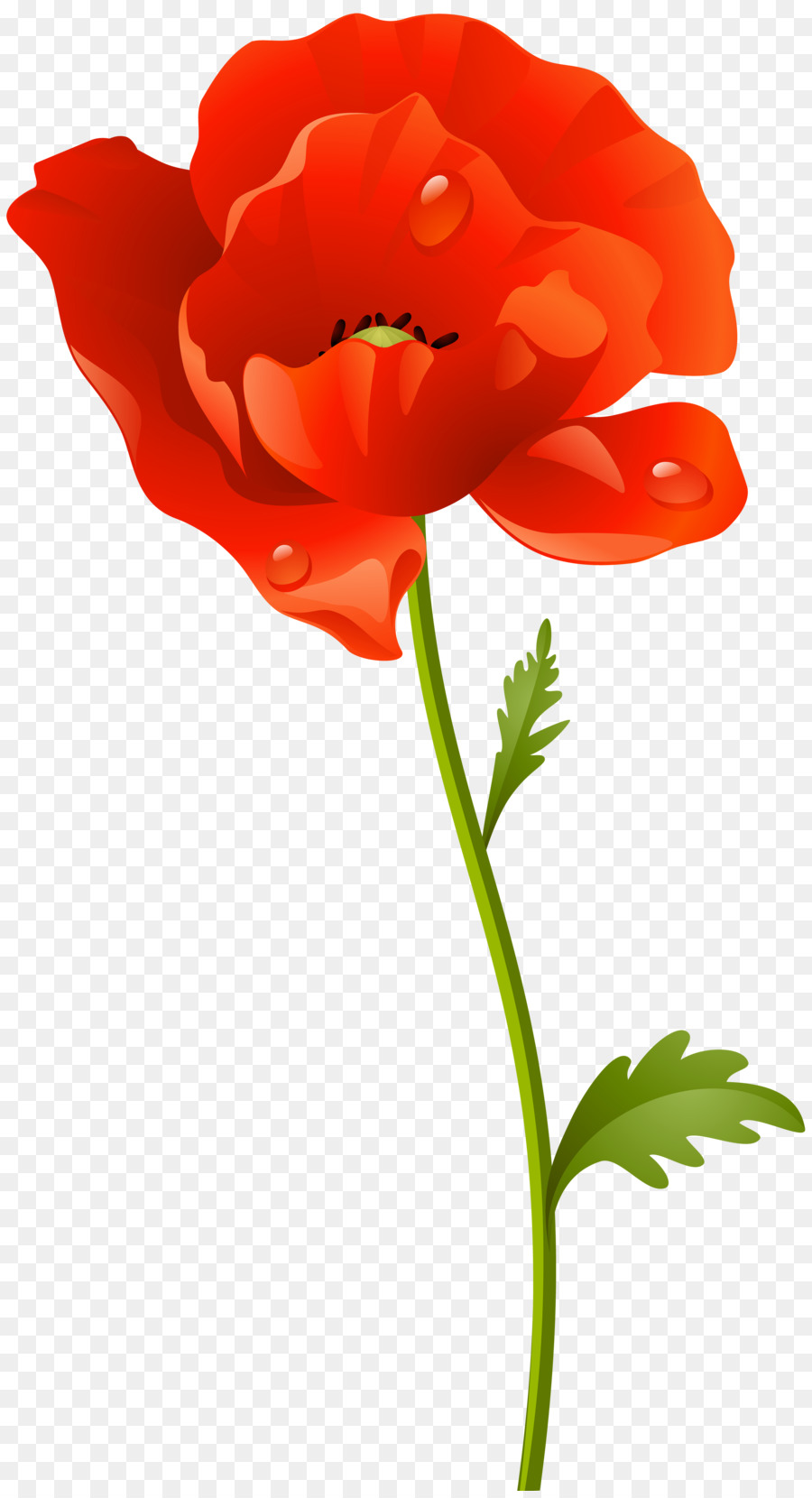 Poppy clipart stems. Flowers background