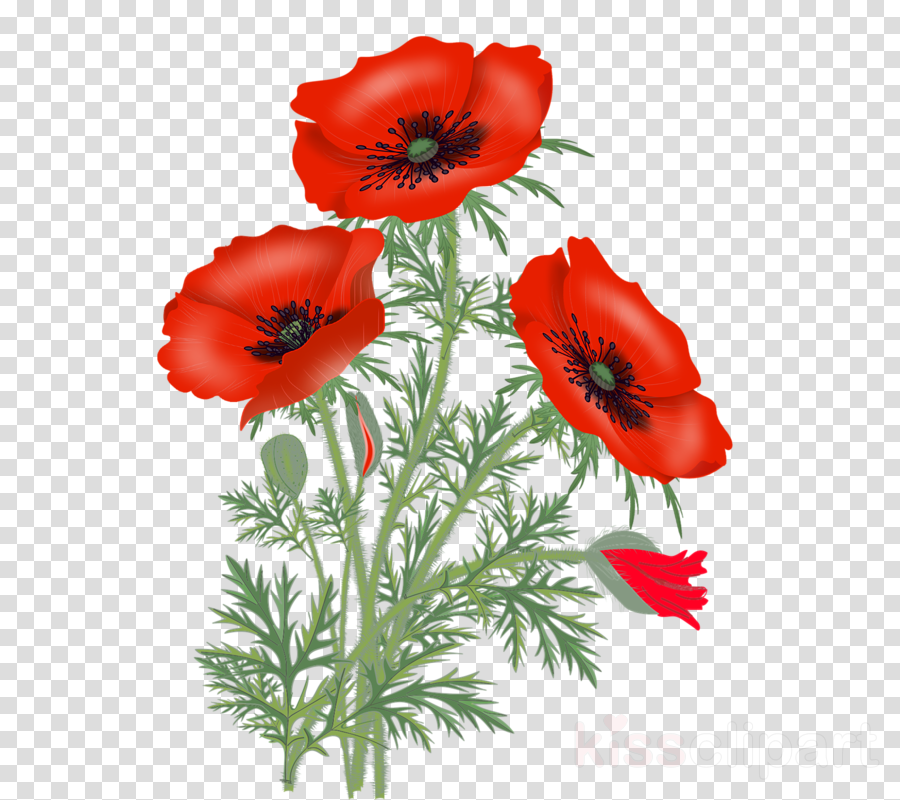 Poppy clipart stems. Flower with stem painting