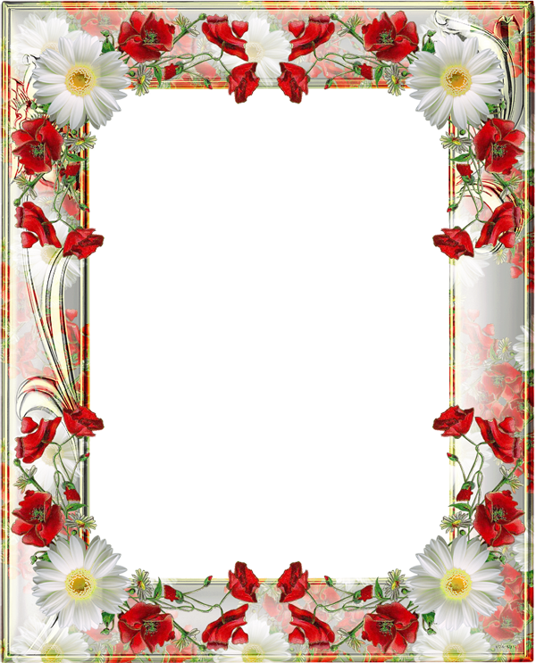 Transparent png photo frame. Poppy clipart three