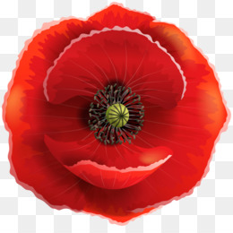 Common png and free. Poppy clipart transparent background