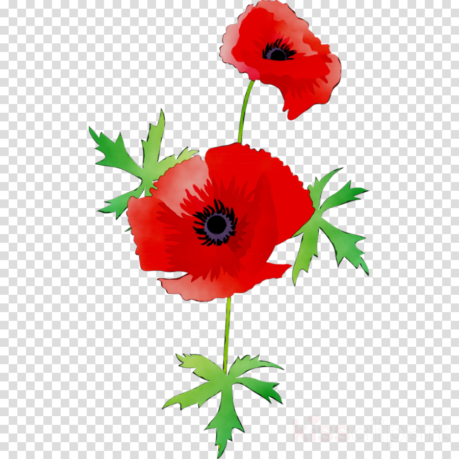 Flowers flower red . Poppy clipart transparent background