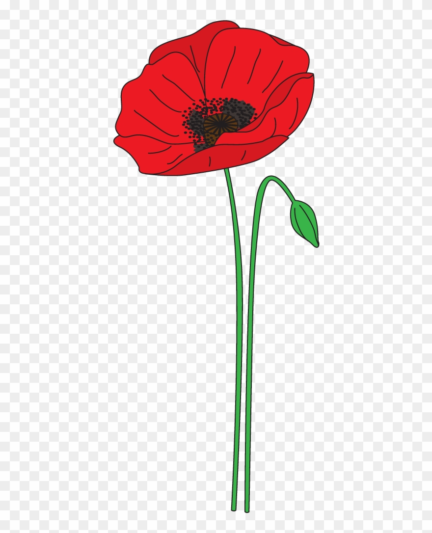 Poppy clipart transparent background. Png stock collection of