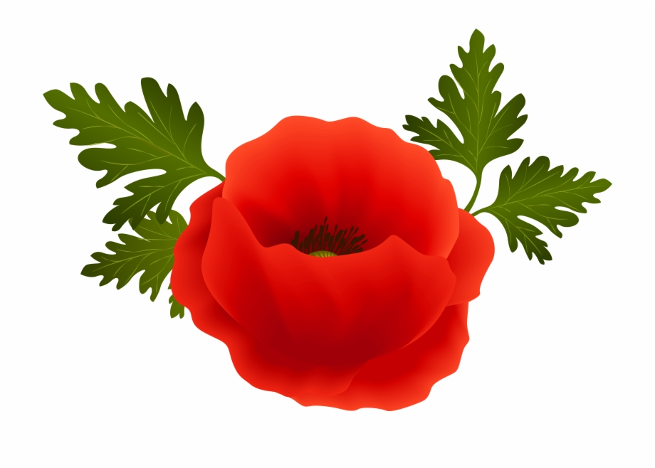 Field png . Poppy clipart transparent background