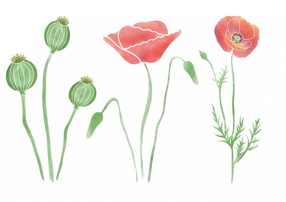 Poppy clipart watercolor. Poppies