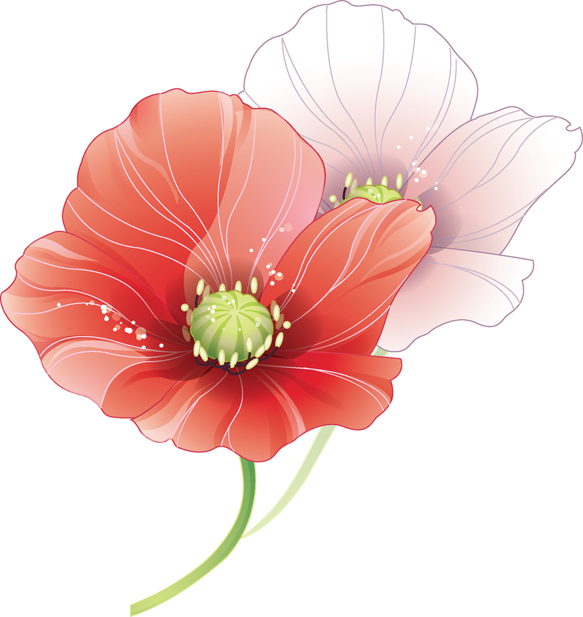 Tubes fleurs coquelicots pinterest. Poppy clipart watercolor