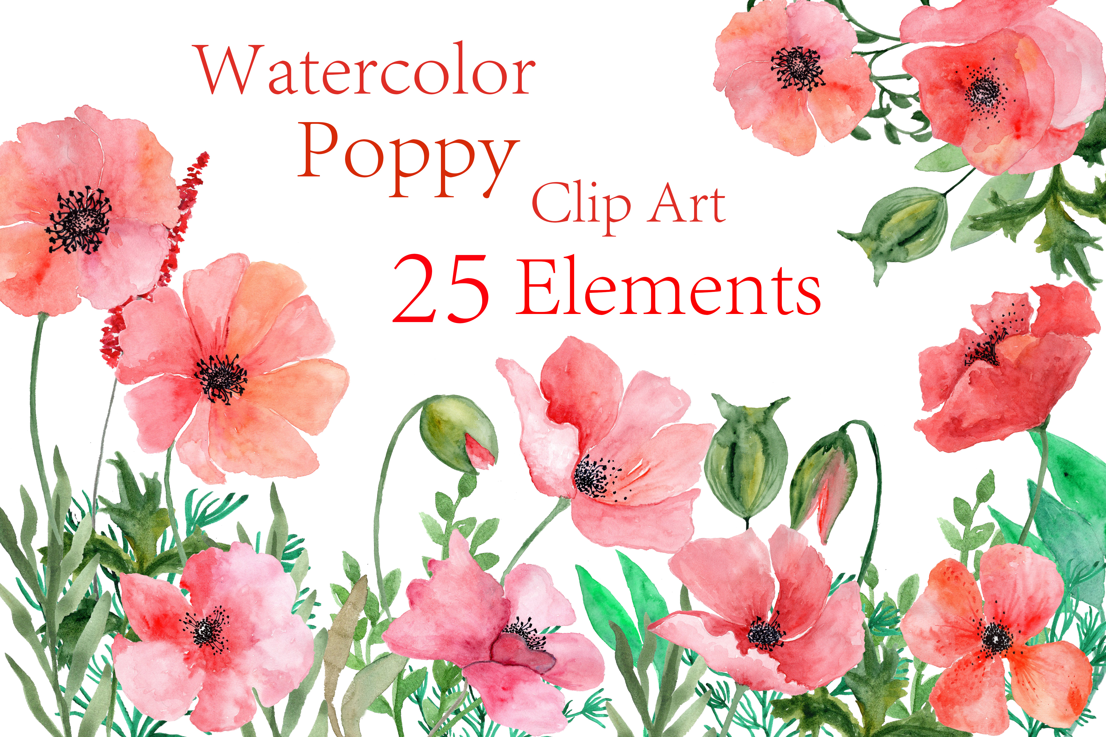 Poppy clipart watercolor. Flowers
