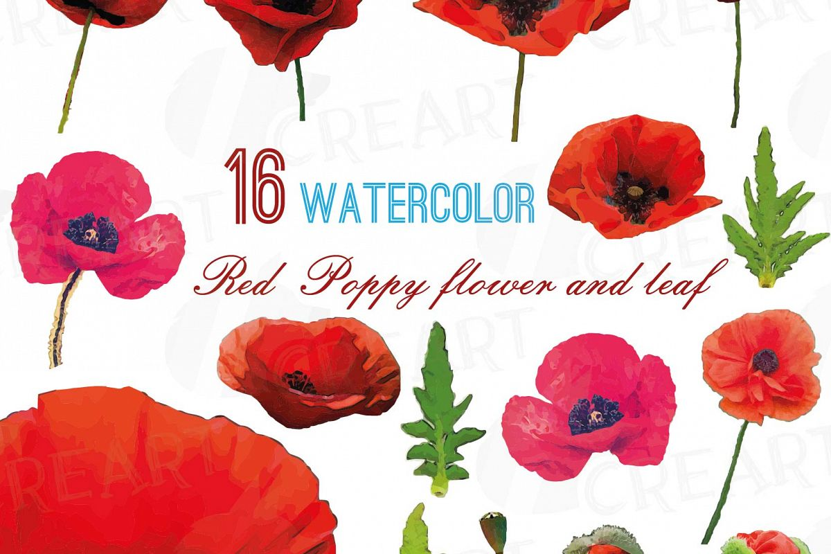 Red flower and leaf. Poppy clipart watercolor