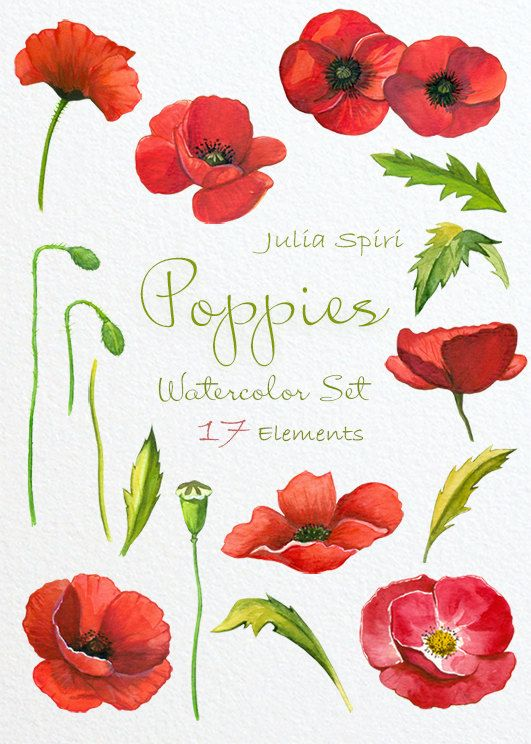 Poppy clipart watercolor. Poppies flowers hand painted