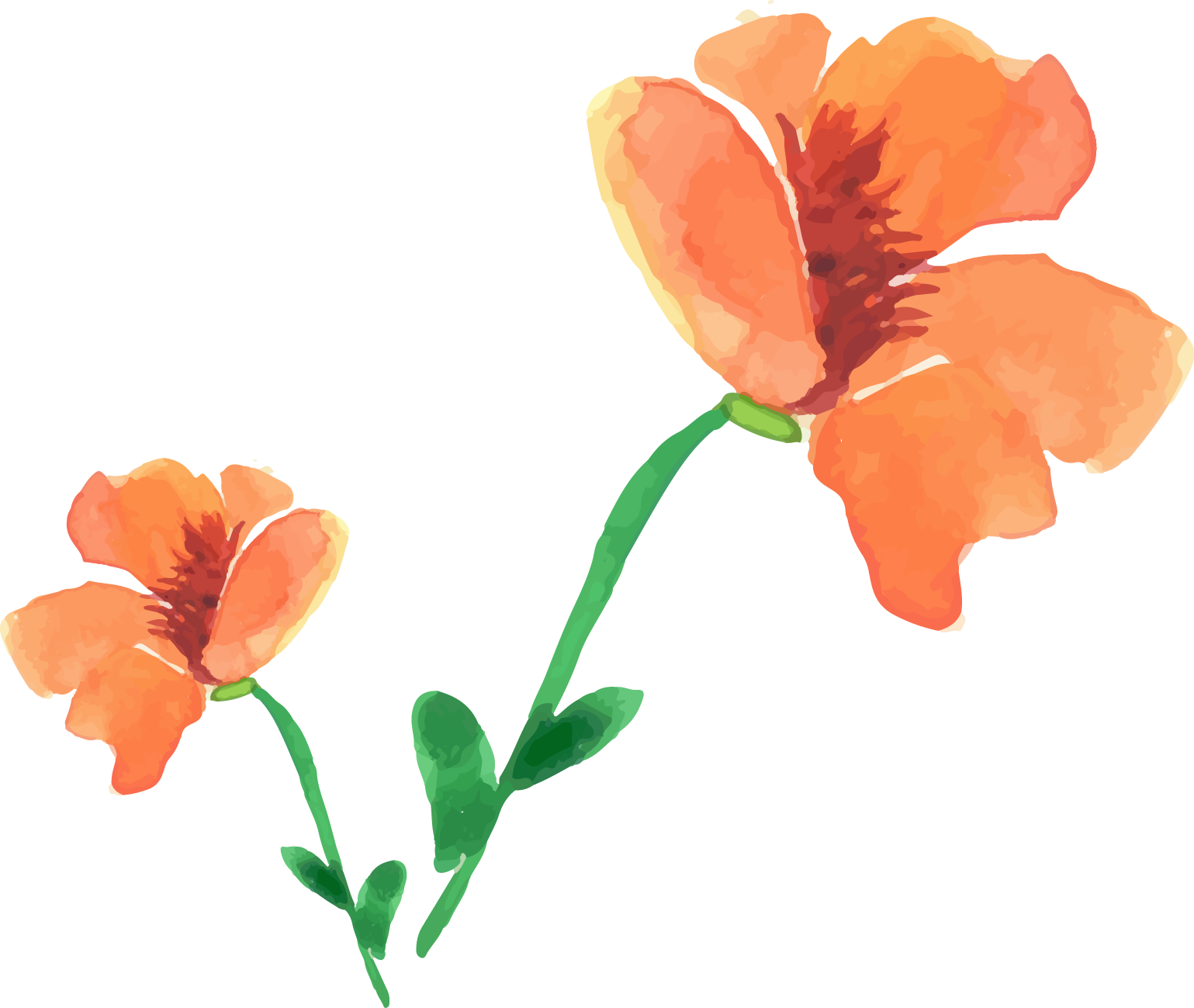 Painting flower painted floral. Poppy clipart watercolor