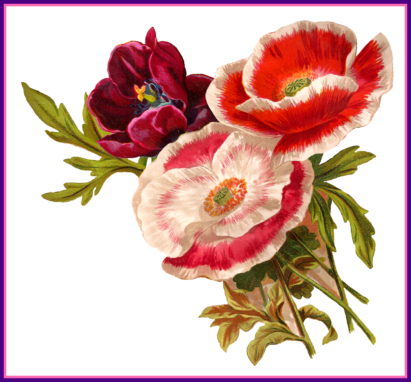 ideas of old. Poppy clipart ww1