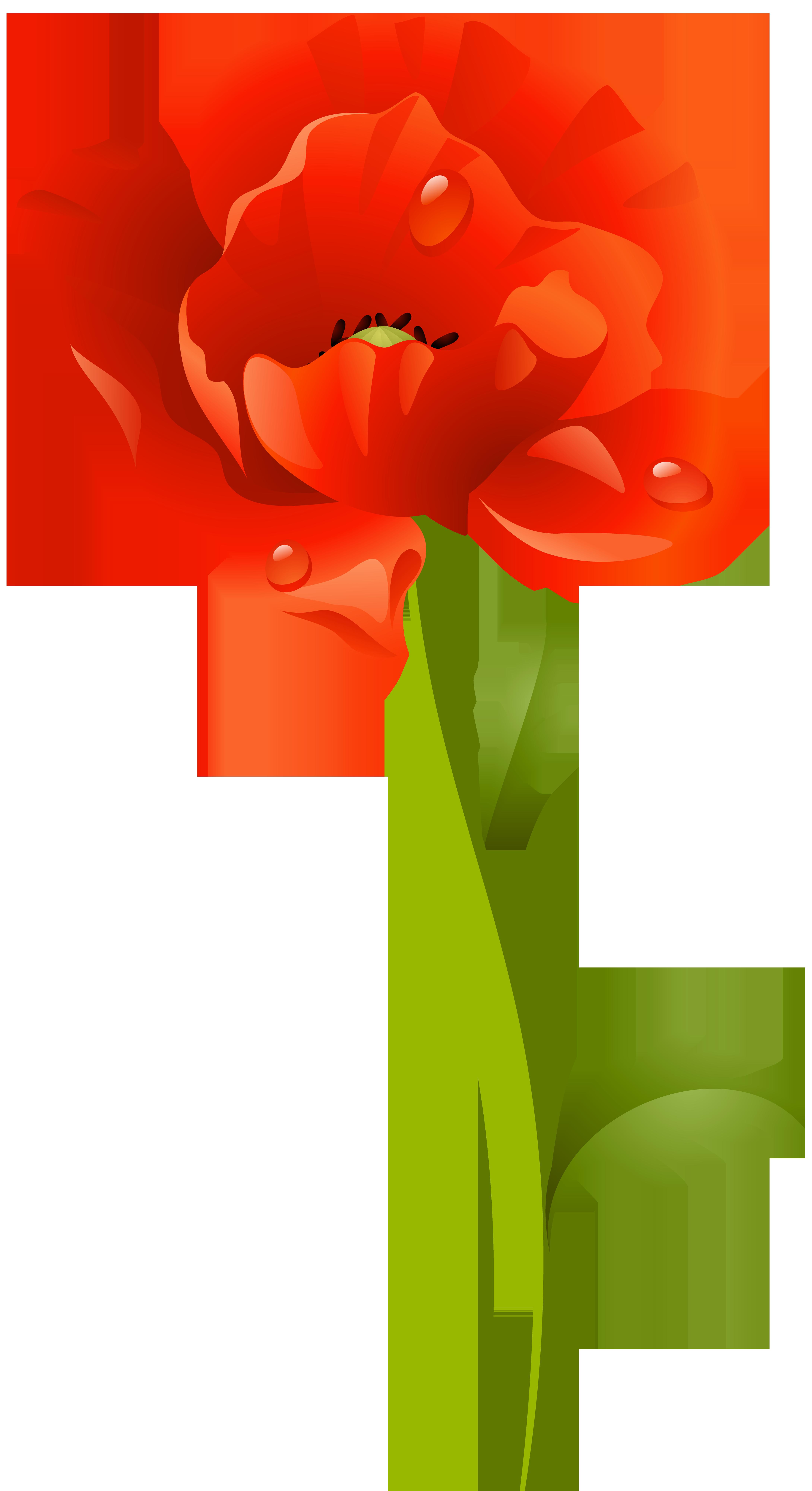 Poppy clipart red poppy. Flower png clip art