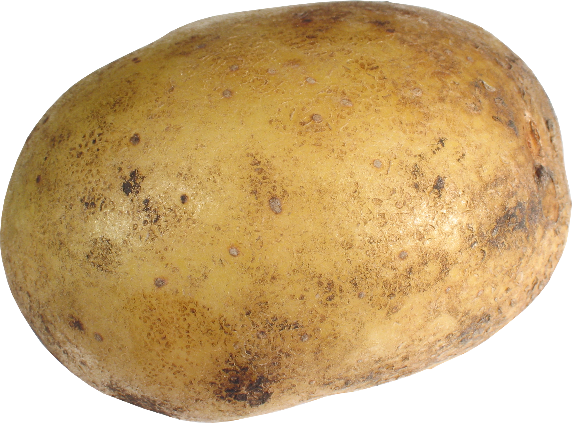 Potato clipart. Png images panda free