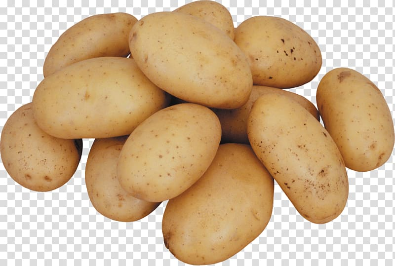 Potato clipart russet. Burbank baked french fries