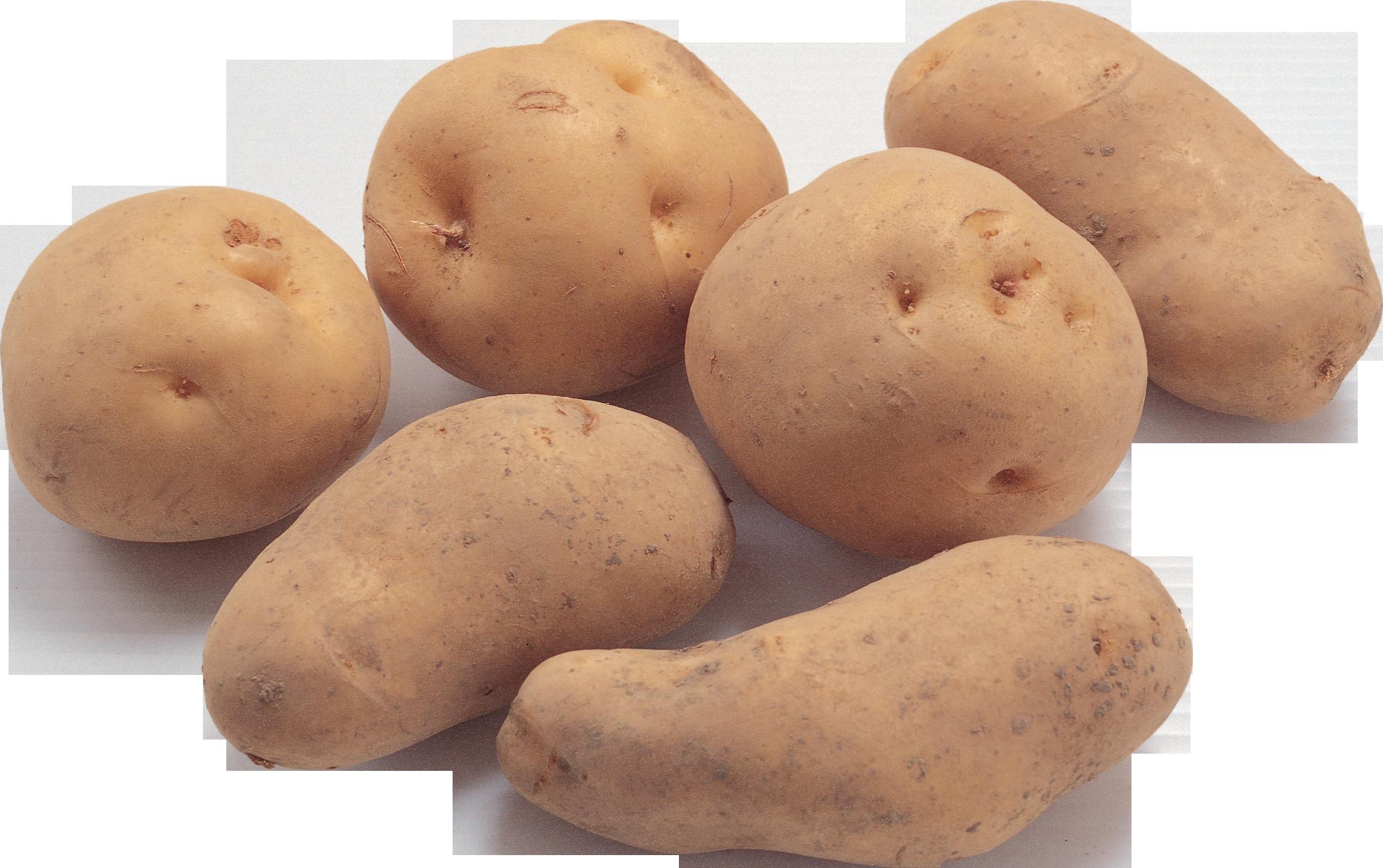 Potato clipart russet. Png images