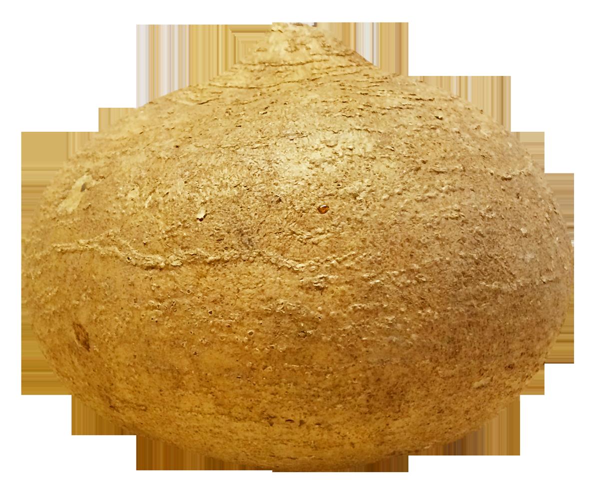 Potato clipart yam. Jicama png image pngpix