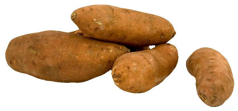 Potato clipart yam. Fresh sweet png image