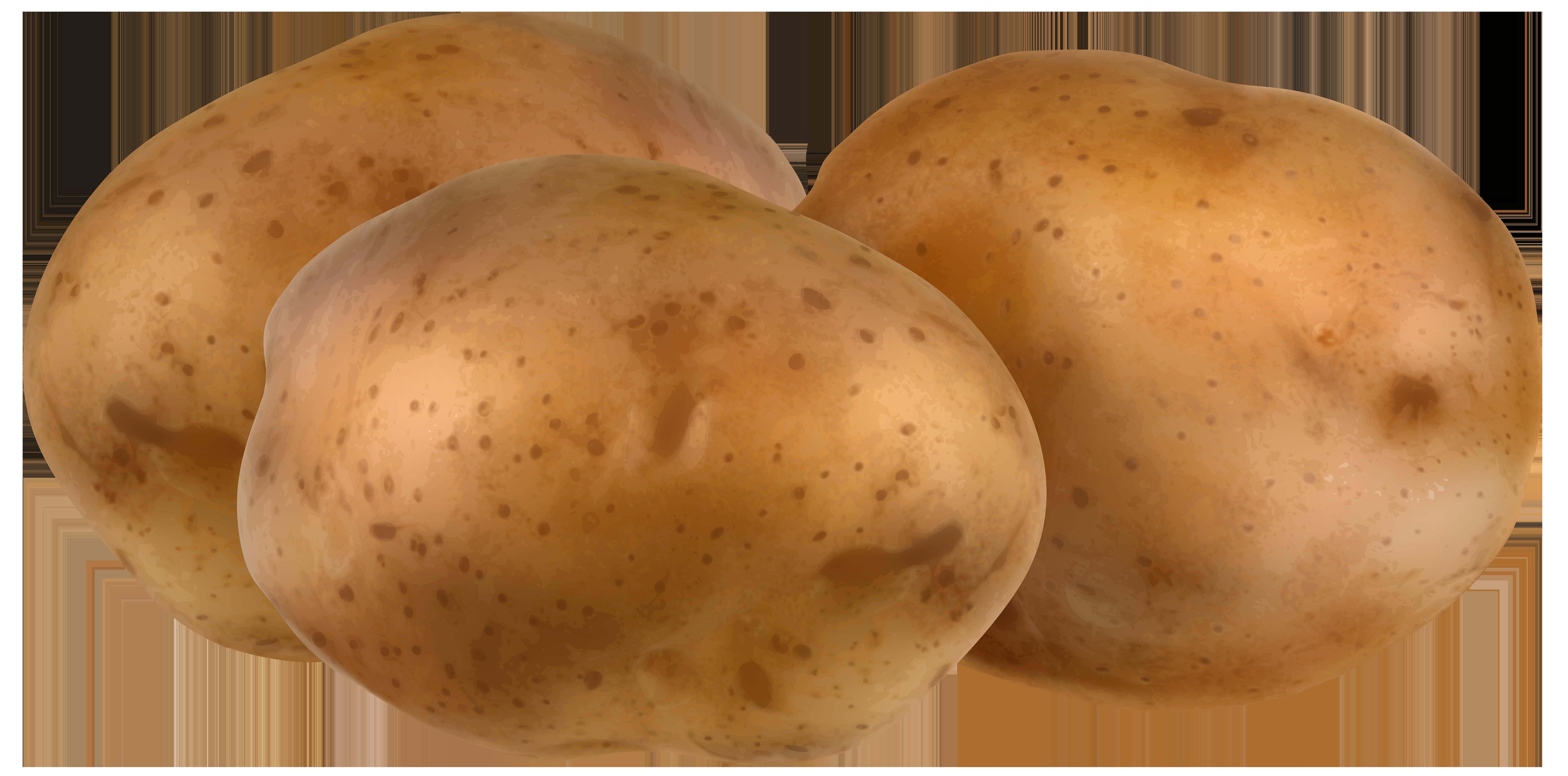 Potatoes transparent png clip. Potato clipart