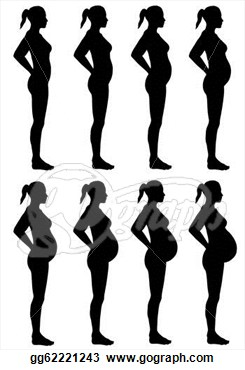 Stages of panda free. Pregnancy clipart pregnancy stage