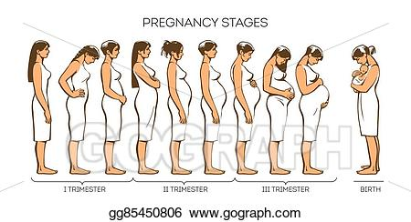 Pregnancy clipart pregnancy stage. Stock illustration women stages