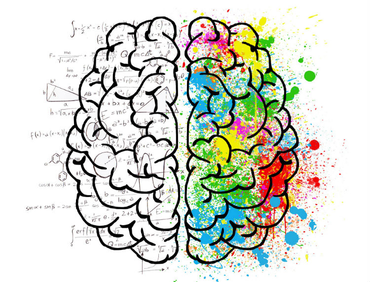 questions we still. Psychology clipart brain function