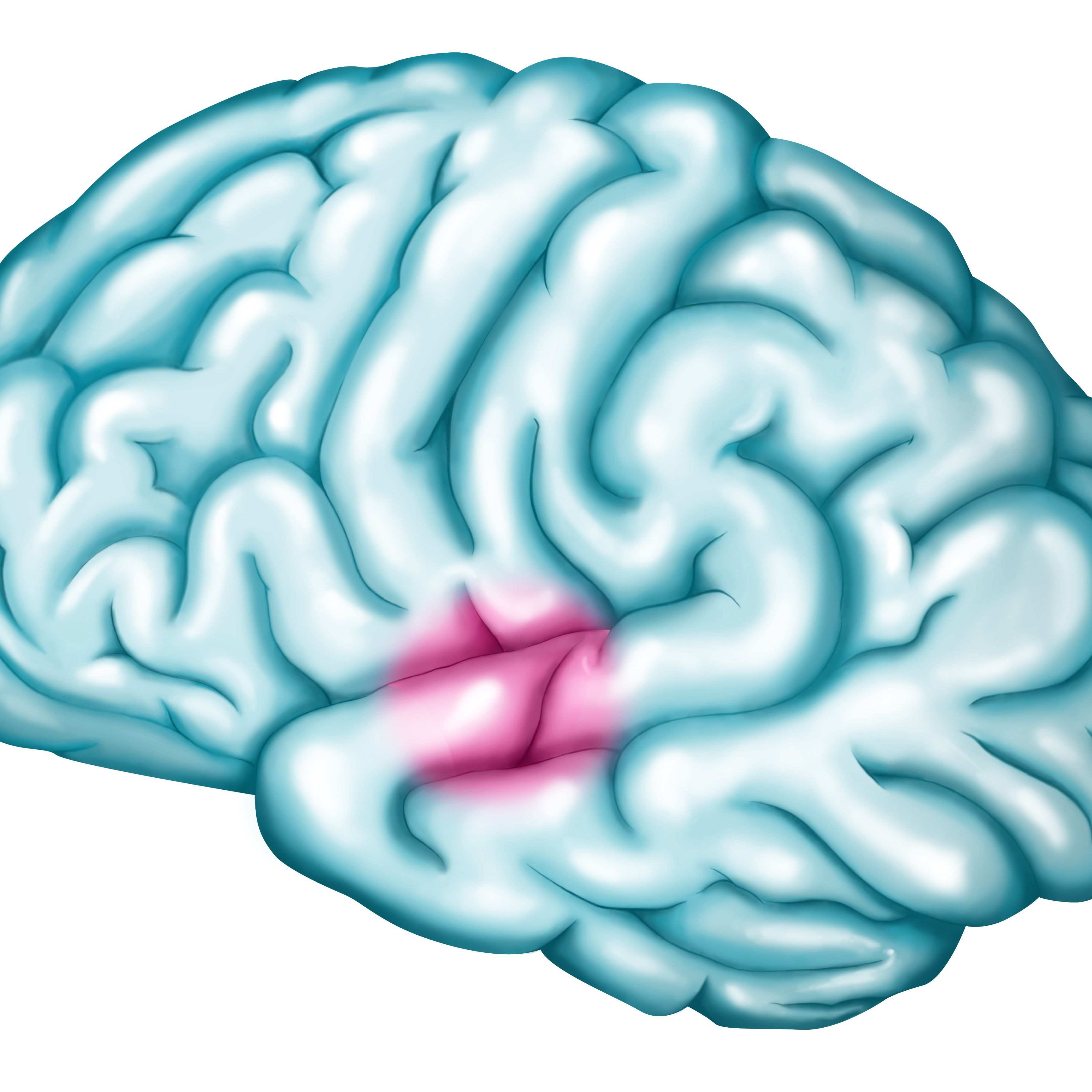 Wernicke s area location. Psychology clipart brain function