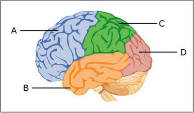 Psychology clipart brain function. Discussion ii methods of