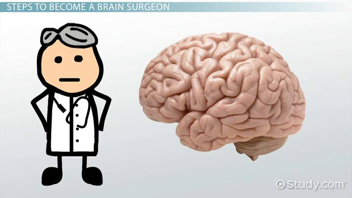 Psychology clipart brain surgeon. How to become a
