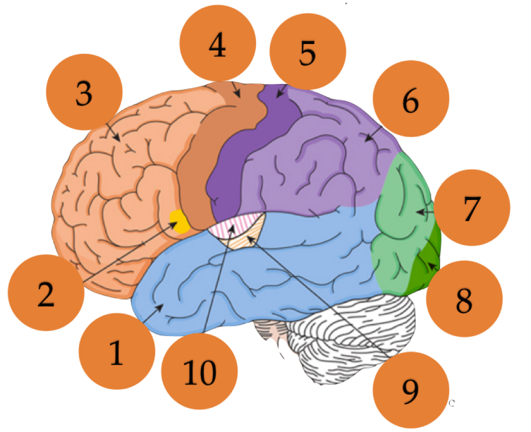 Unit introductory test no. Psychology clipart brain surgeon