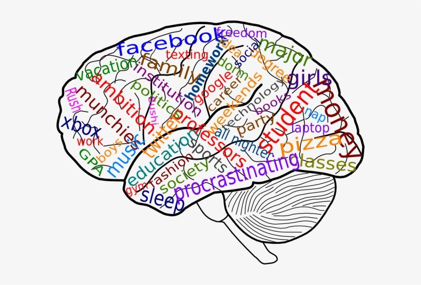 Clip art clipartcow transparent. Psychology clipart brain