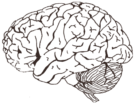 Psychology clipart science brain. Cognitive neuroscience materials for
