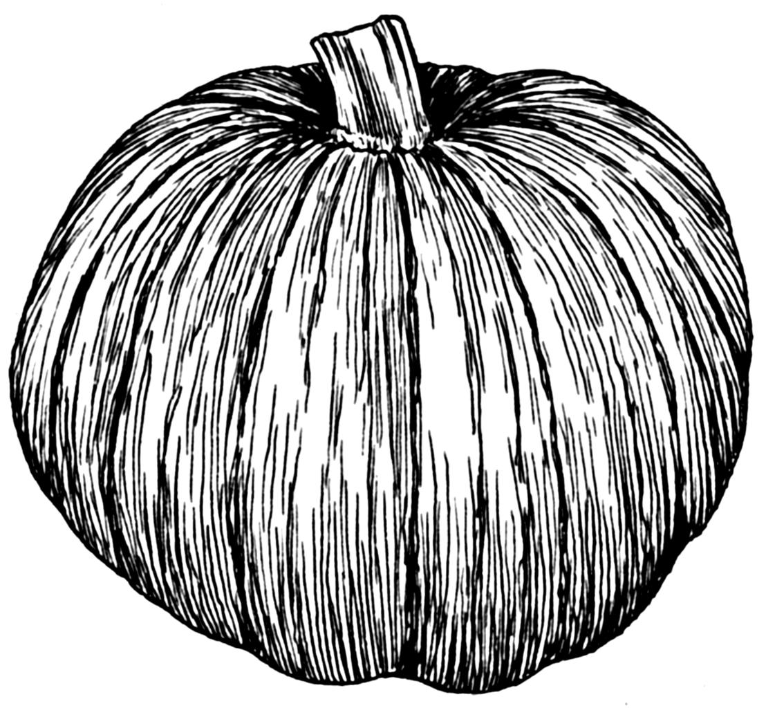 X free clip art. Pumpkin clipart sketch