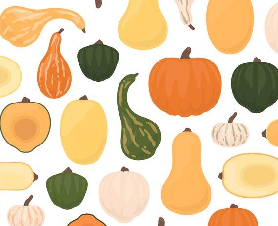 Autumn fall clip art. Pumpkin clipart squash