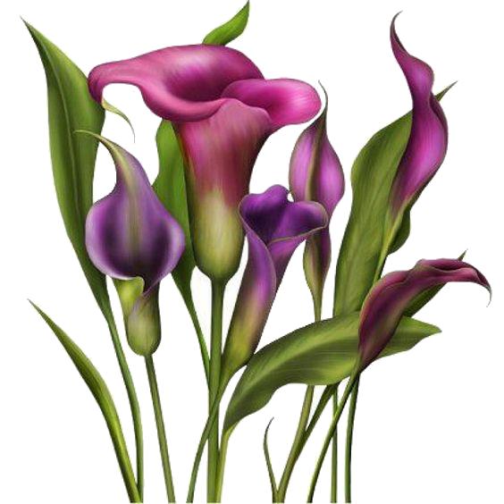 Gfycat clip art hand. Purple clipart calla lilies