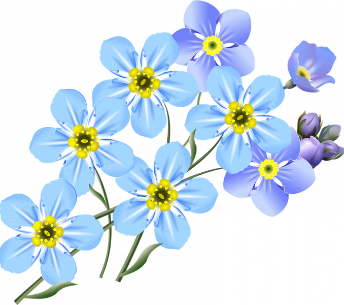 Purple clipart forget me not. At getdrawings com free