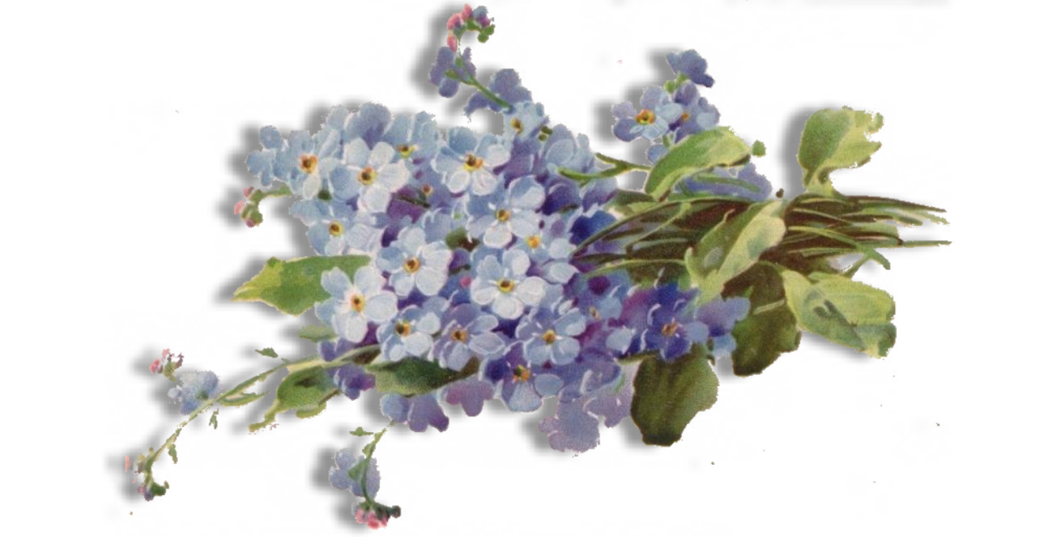 Nots blog link. Purple clipart forget me not