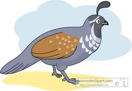 Search results for clip. Quail clipart
