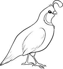 Quail clipart. Google search drawing ideas