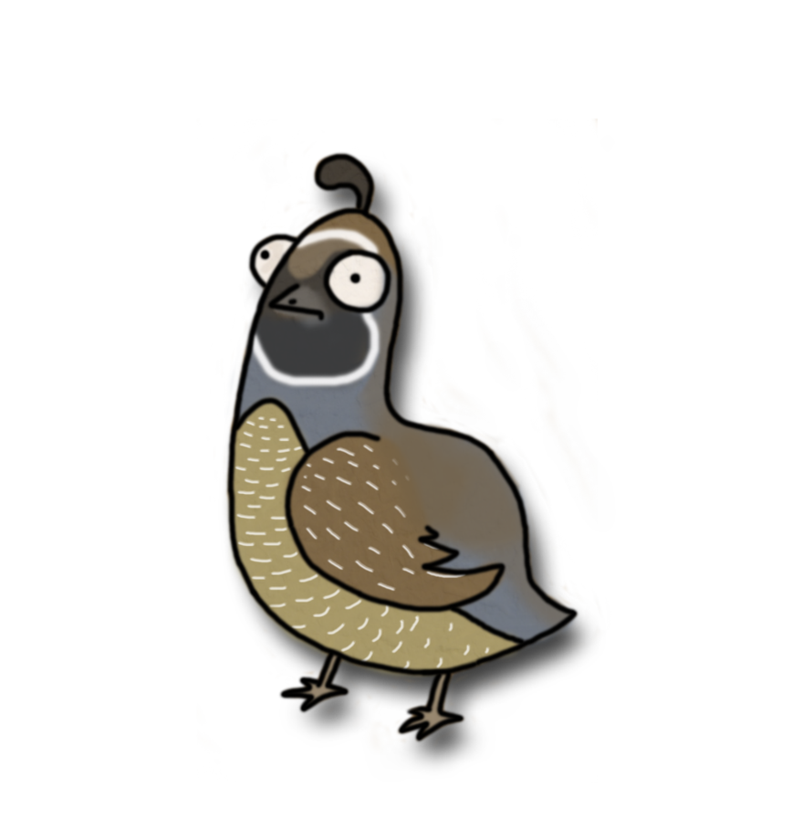 Quail clipart baby quail. By illusiongecko on deviantart