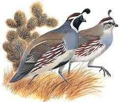 Image result for images. Quail clipart clip art