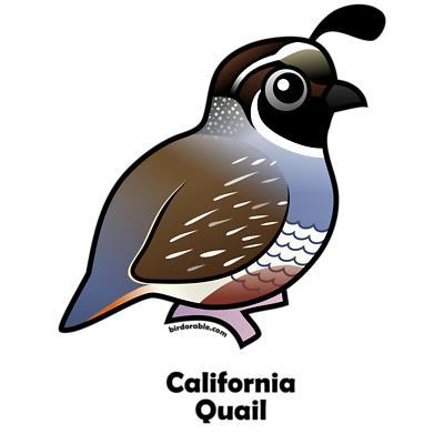 Quail clipart cute. Free cliparts download clip
