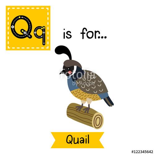 Q letter tracing queen. Quail clipart kid