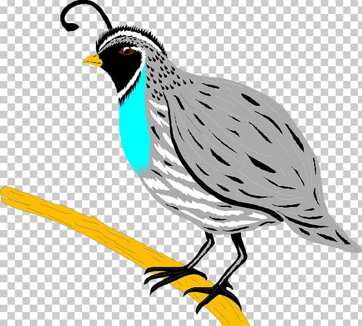 Bird png animals artwork. Quail clipart partridge