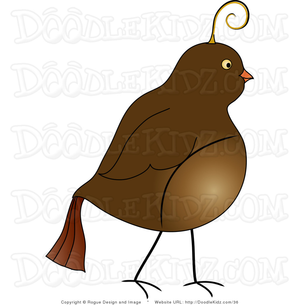 Quail clipart partridge. Free download best on