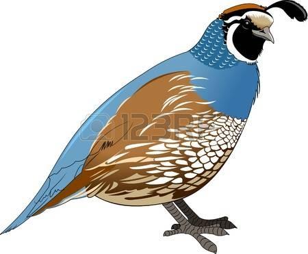 Quail clipart quail bird. Gomediaction net
