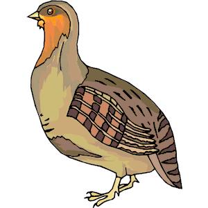 Png hd transparent images. Quail clipart quail bird