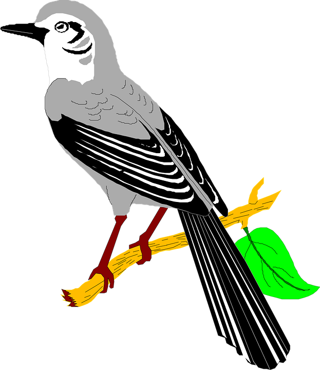 Quail clipart vector. E how knows nothing