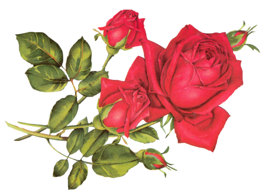 R clipart rose. Red by jinifur on