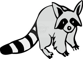 Raccoon panda free images. Racoon clipart