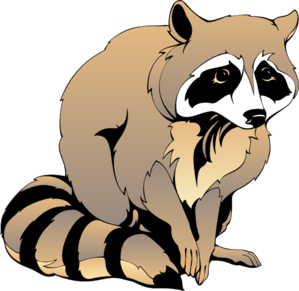 Racoon clipart. Raccoon clip art at