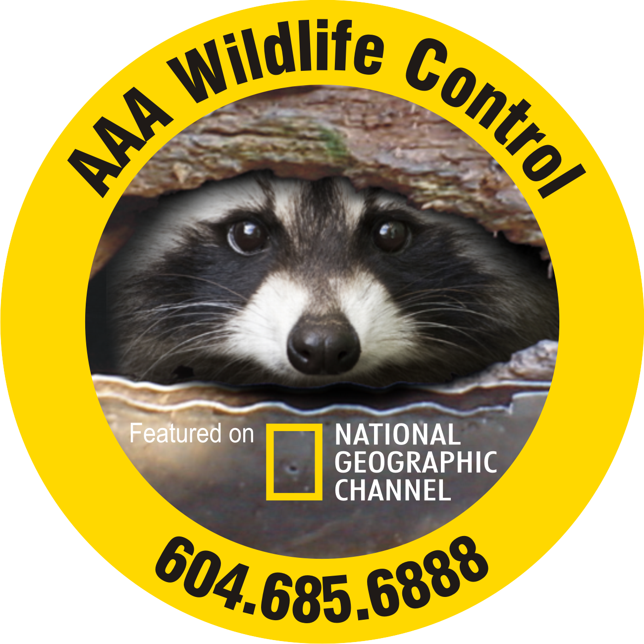Racoon clipart badger. Aaa wildlife control pest